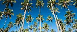 Kauai Coconuts