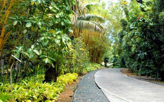 Smiths Garden Path